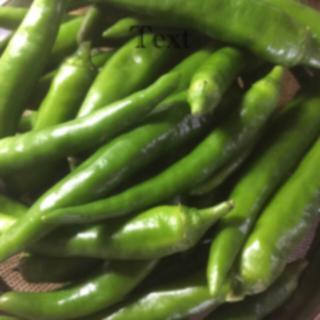 青唐辛子   500g   無農薬(野菜)