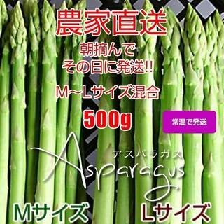 グリーンアスパラガス 500g 採りたて野菜(野菜)