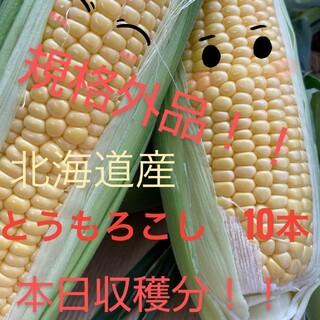 北海道産とうもろこし規格外品【10本入】(野菜)