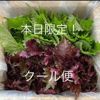 赤紫蘇・青紫蘇茎付き 60サイズ いっぱい(野菜)