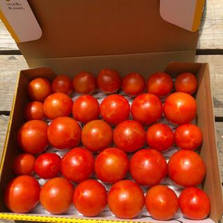 8月4日収穫分フルーツトマト(野菜)