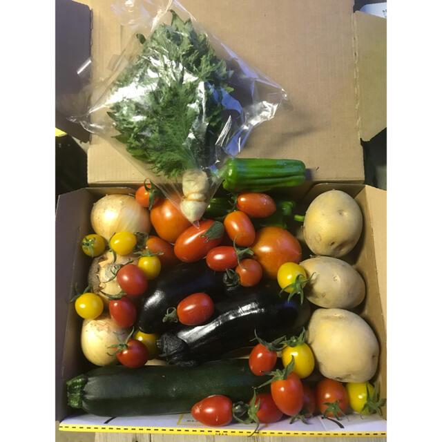 夏野菜セット 徳島産 無農薬 コンパクト箱いっぱいお入れして送ります 食品/飲料/酒の食品(野菜)の商品写真