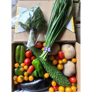 夏野菜セット 徳島産 無農薬 コンパクト箱いっぱいお入れして送ります