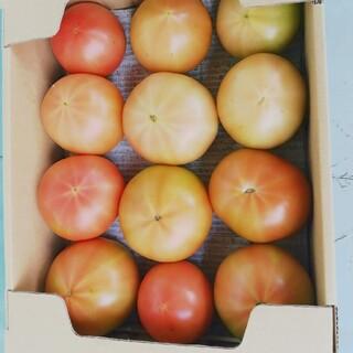 トマトとまと訳あり約2キロ