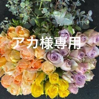 増量!バラ 《切り花 ・生花 》ユーカリおまかせミックス  30㎝SM  60本