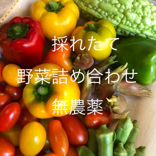 無農薬 野菜 詰め合わせ 新鮮  3