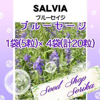 ブルーセージ 家庭菜園 野菜 ハーブ 種(その他)
