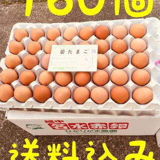 160個 若たまご 卵掛けご飯 生2週間 加熱1ヶ月 北海道*沖縄追加送料