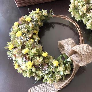 柏葉紫陽花と黄色い小花のリース♡ドライフラワーリース(ドライフラワー)