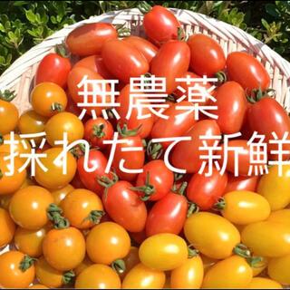 無農薬 フルーツミニトマト 900g以上(野菜)