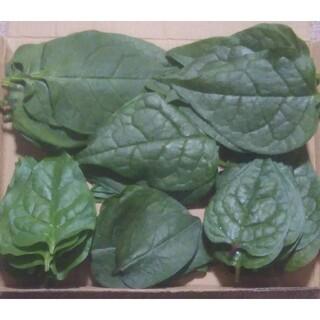 つるむらさき(野菜)