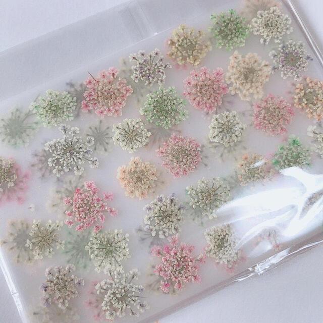 レースフラワー 押し花 パステルミックス 70枚 ハンドメイドの素材/材料(各種パーツ)の商品写真