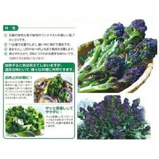 紫茎ブロッコリーの種 50粒(その他)