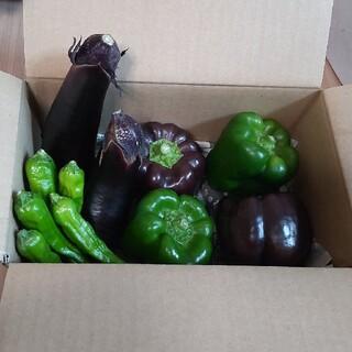 野菜詰め合わせ(ジャンボピーマン&紫ピーマン&ナス&ししとう)(野菜)