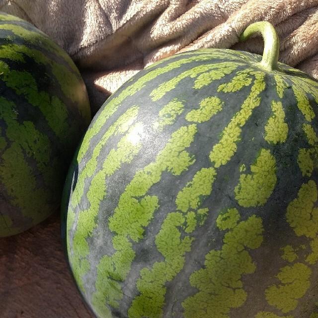 【訳あり】糖度12度以上 秋田 農家直送スイカ 西瓜 キズ むら 6Lサイズ1玉 食品/飲料/酒の食品(野菜)の商品写真
