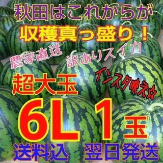 【訳あり】糖度12度以上 秋田 農家直送スイカ 西瓜 キズ むら 6Lサイズ1玉