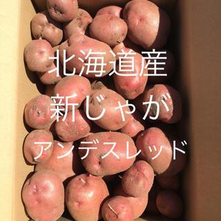 北海道産じゃがいも約8kg〜アンデスレッド〜(野菜)