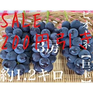 本日限定 200円引き 大玉葡萄 ピオーネ3房 約1.2kg福岡県産