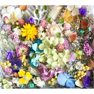 ドライフラワー花材セットNo.229⁑カラフルバラエティー(ドライフラワー)