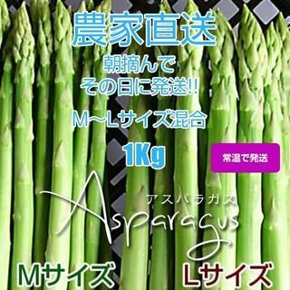 グリーンアスパラガス 1kg 採りたて野菜(野菜)