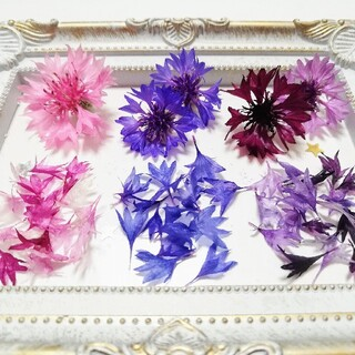 矢車草の花びら✱30輪分✱紫・薄紫&青・ピンク(ドライフラワー)
