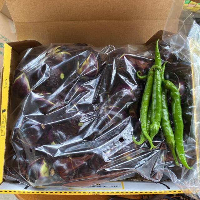 山形県置賜伝統野菜 農家が自家用に作った薄皮丸ナス 安心安全 950g以上 食品/飲料/酒の食品(野菜)の商品写真