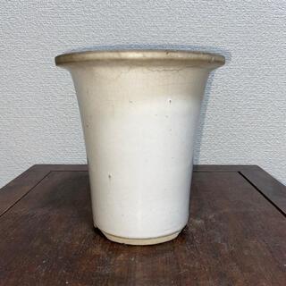 植木鉢 蘭鉢 白 クリーム 丸鉢 懸崖 鉢 盆栽鉢(その他)