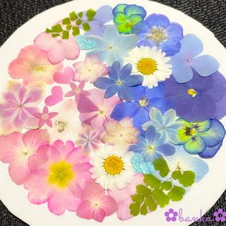 【もりちー様専用】✿押し花素材✿ピンク&ブルー系アソート【26枚】