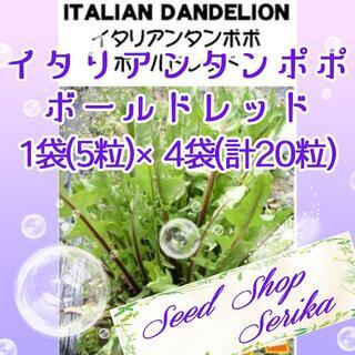 イタリアンタンポポボールドレッド 家庭菜園 野菜 ハーブ 種(その他)