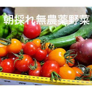 無農薬野菜詰め合わせ きゅうり オクラ  ピーマン 紫玉ねぎ ミニトマト(野菜)