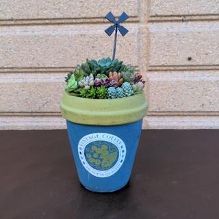 ❀ 多肉植物寄せ植え ❀ coffeeカップ型セメント鉢(プランター)