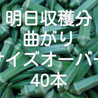 鹿児島産オクラサイズオーバー40~本