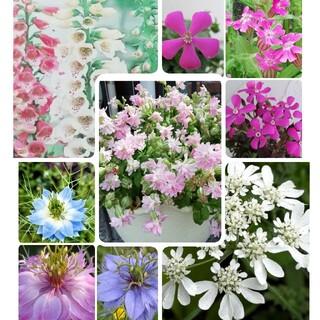♥花の種 シレネ2種 オルレア ニゲラ ジキタリス(プランター)