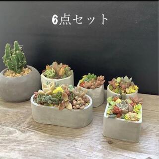 ハンドメイド セメント鉢6点セット(植物無し)(プランター)