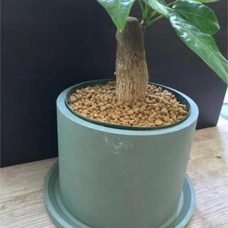 オシャレセメント鉢(プランター)