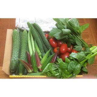 野菜詰め合わせ 盛り盛り コンパクトBOX(野菜)
