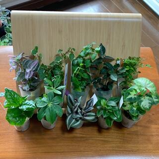 ミニ観葉植物 寄せ植え用 10種セット(プランター)