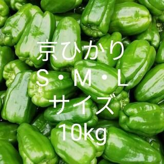 ピーマン 京ひかり S・M・Lサイズ 10kg(野菜)
