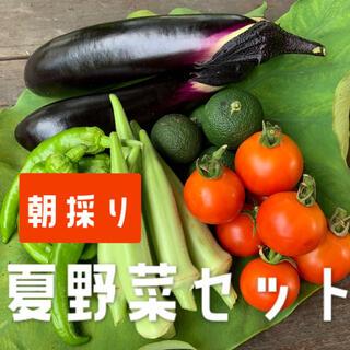兵庫県産 夏野菜セット(野菜)