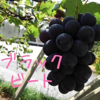ぶどう【ブラックビート】1キロ箱(フルーツ)