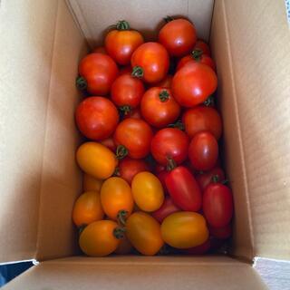ミニトマト、ミディトマト2,0kg(野菜)