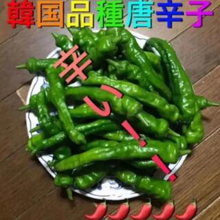 青唐辛子500g+コレクション2点まとめ売り(野菜)