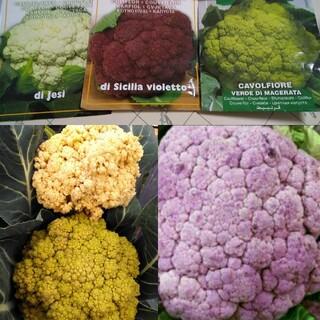 専用ページ〉野菜の種いろいろ(その他)
