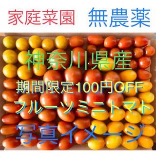 野菜 無農薬フルーツミニトマト 箱にいっぱいまで詰めます(野菜)