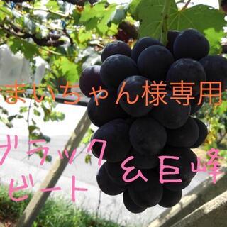 ★まいちゃん様専用★ブラックビート&巨峰(フルーツ)