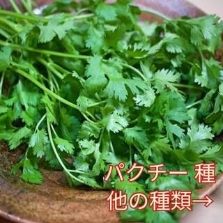 野菜種☆パクチー☆変更→ほうれん草 つるむらさき カラフル人参 ベビーリーフ(野菜)