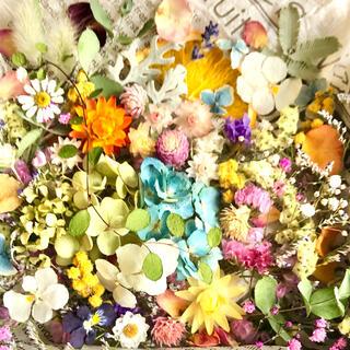 ドライフラワー花材セットNo.236⁑カラフルバラエティー(ドライフラワー)