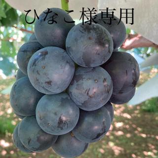 山梨県産  ブラックビート2kg(フルーツ)