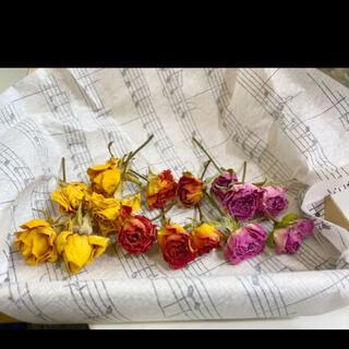 ドライフラワー 薔薇(ドライフラワー)