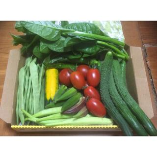 野菜詰め合わせ 採りたてお野菜 コンパクトBOX(野菜)